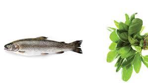 fish greens